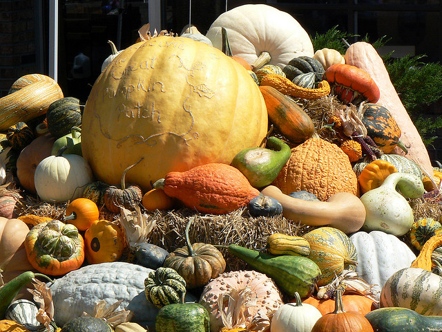 Are We Missing Something About Pumpkins?