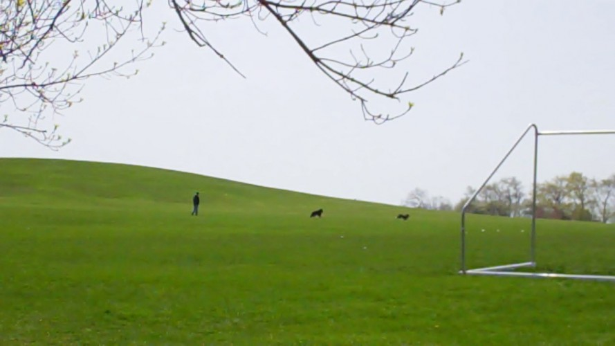 A pet owner playing with his dogs at Montrose Beach Park.
