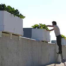 Vanguard Weiss Memorial Rooftop Garden Hopes to Expand; Reaches out to Uptown Community