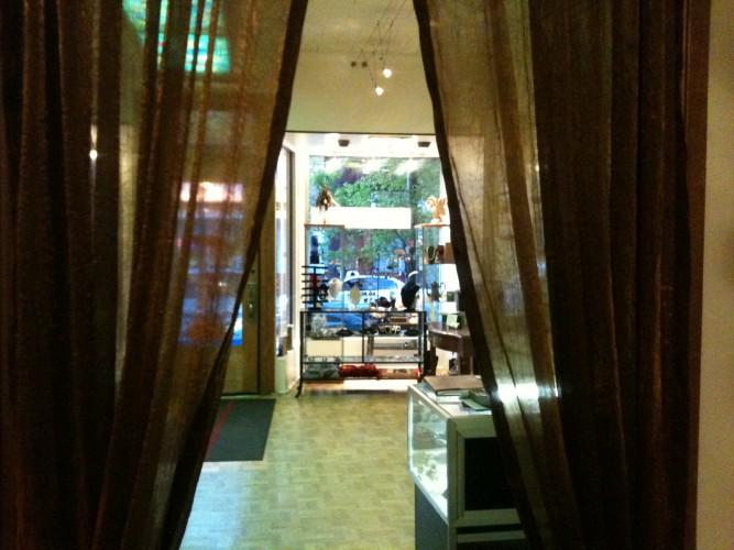 Tea Gallery Owner in Pilsen Has New Plan For Shop