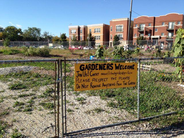 Maxwell Street Community Garden Struggles for Volunteers